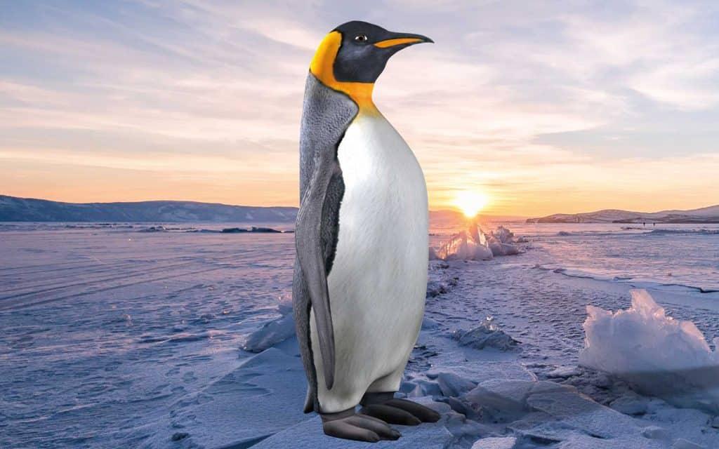 Pinguin Spirit